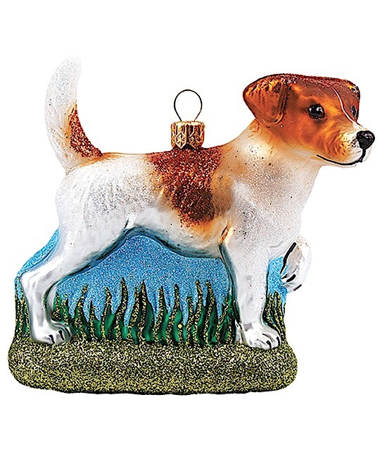 Jack Russell Terrier Hund