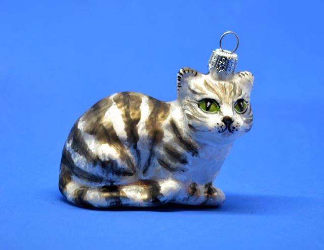 Katze Tiger grau